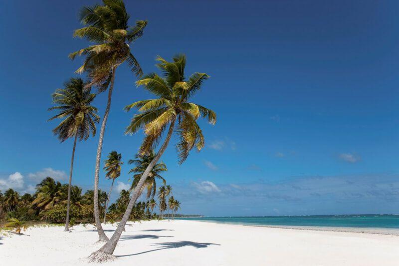schönes Bild mit Palme am Strand in Punta Cana - ohne Abfall im Urlaub