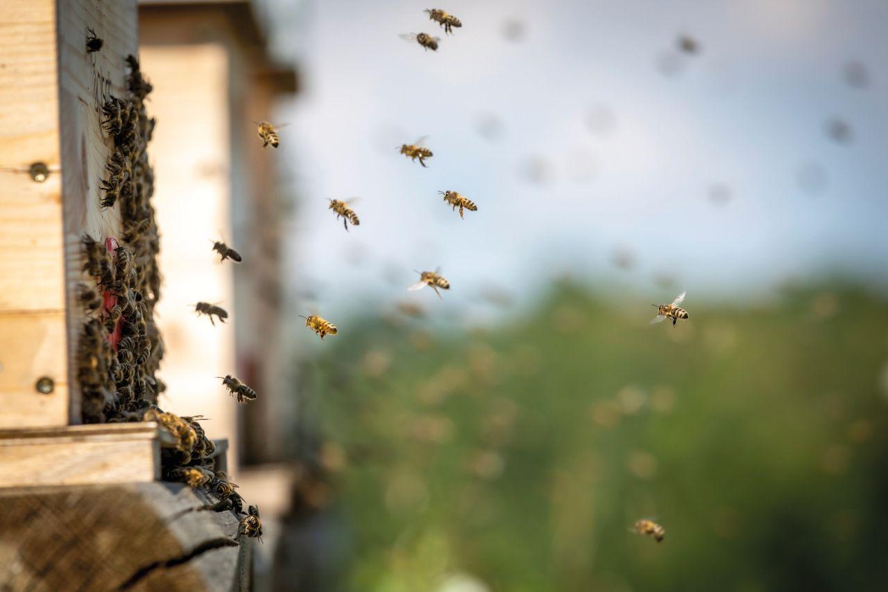 Bienen in der Natur
